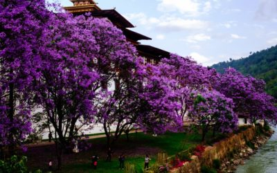 Western Bhutan in Spring 7 Days