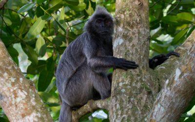 Borneo's Wildlife Wonderland 10 Days
