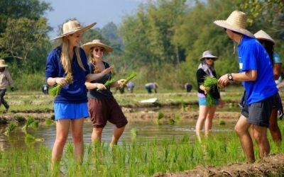 Thailand Sonata 14 Days