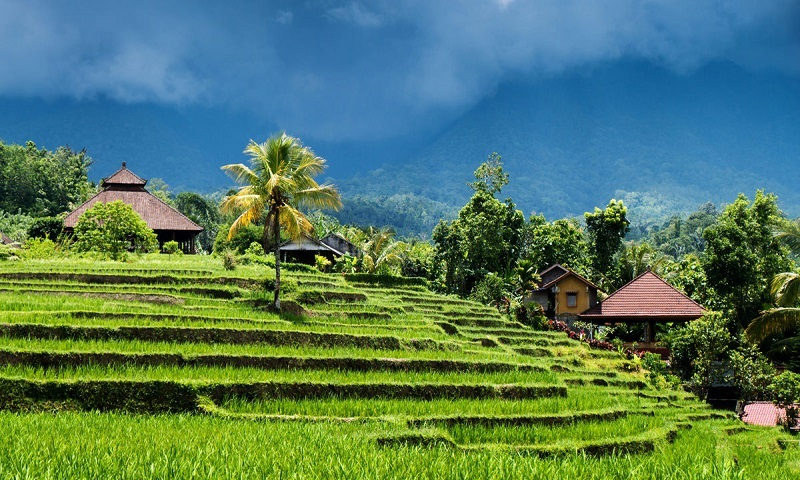 Balinese Culture And Nature 9 Days I Bali Tour Packages I