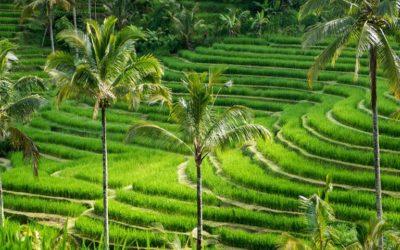 Glimpse of Bali 8 Days