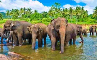 The Undiscovered North of Sri Lanka 14 Days